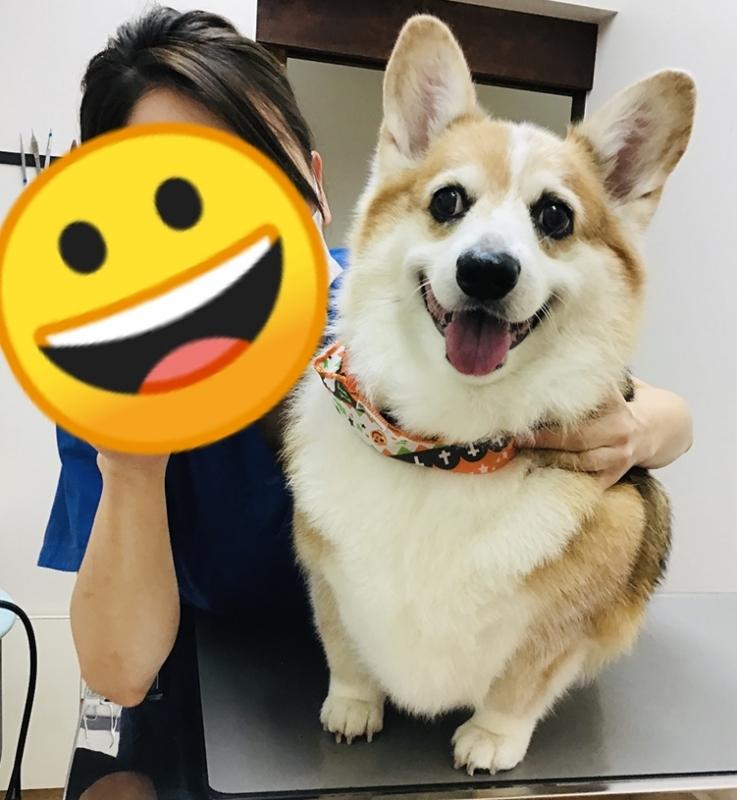 🐶動物看護師の阪本です🐱
